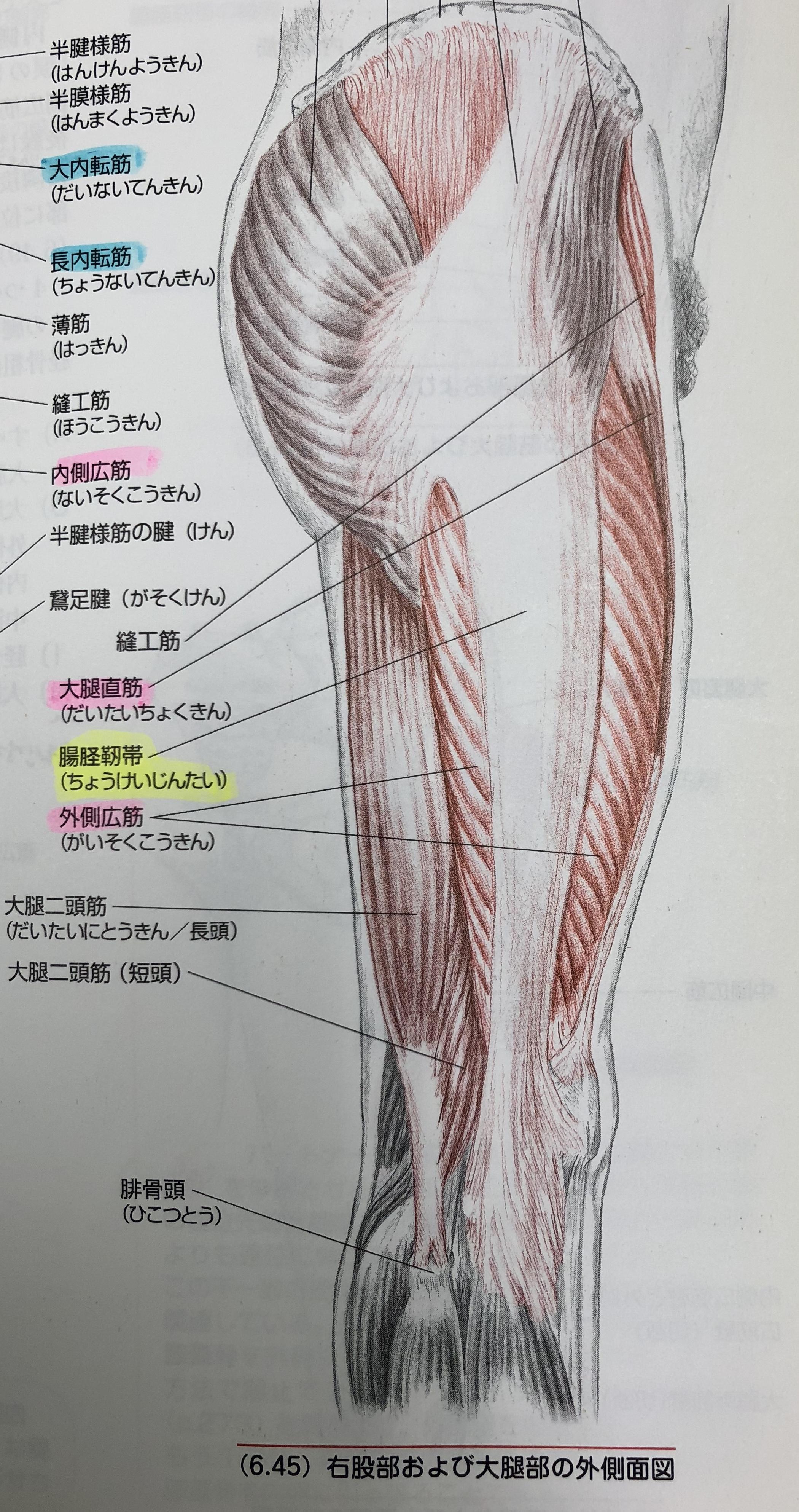 c874718e93 膝の外側の痛み(腸脛靭帯炎)『膝 治療 運動療法』 | 江東区門前仲町の ...